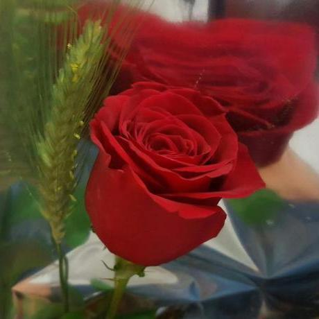 Rosa, Sant Jordi