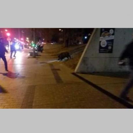 Moments abans que el policia, situat a l'esquerra, disparés contra l'animal