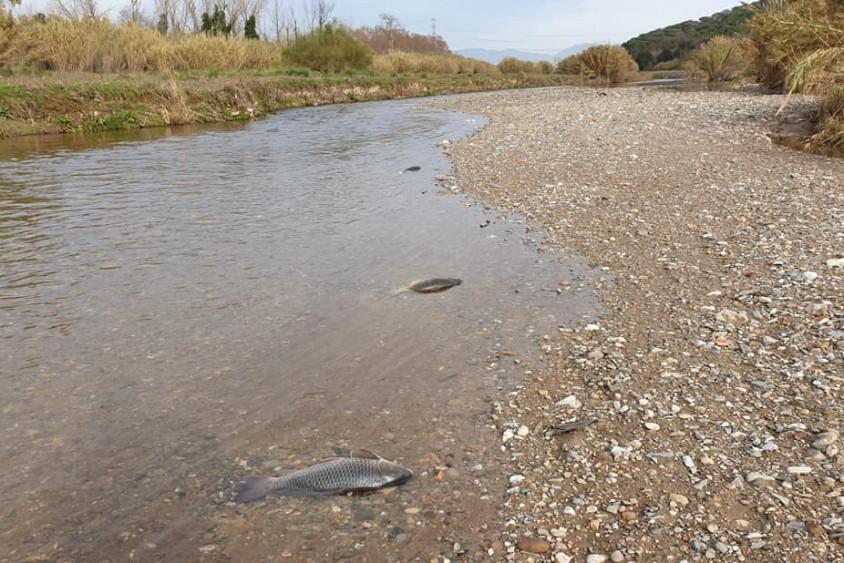 Impacte ecològic al riu Besòs