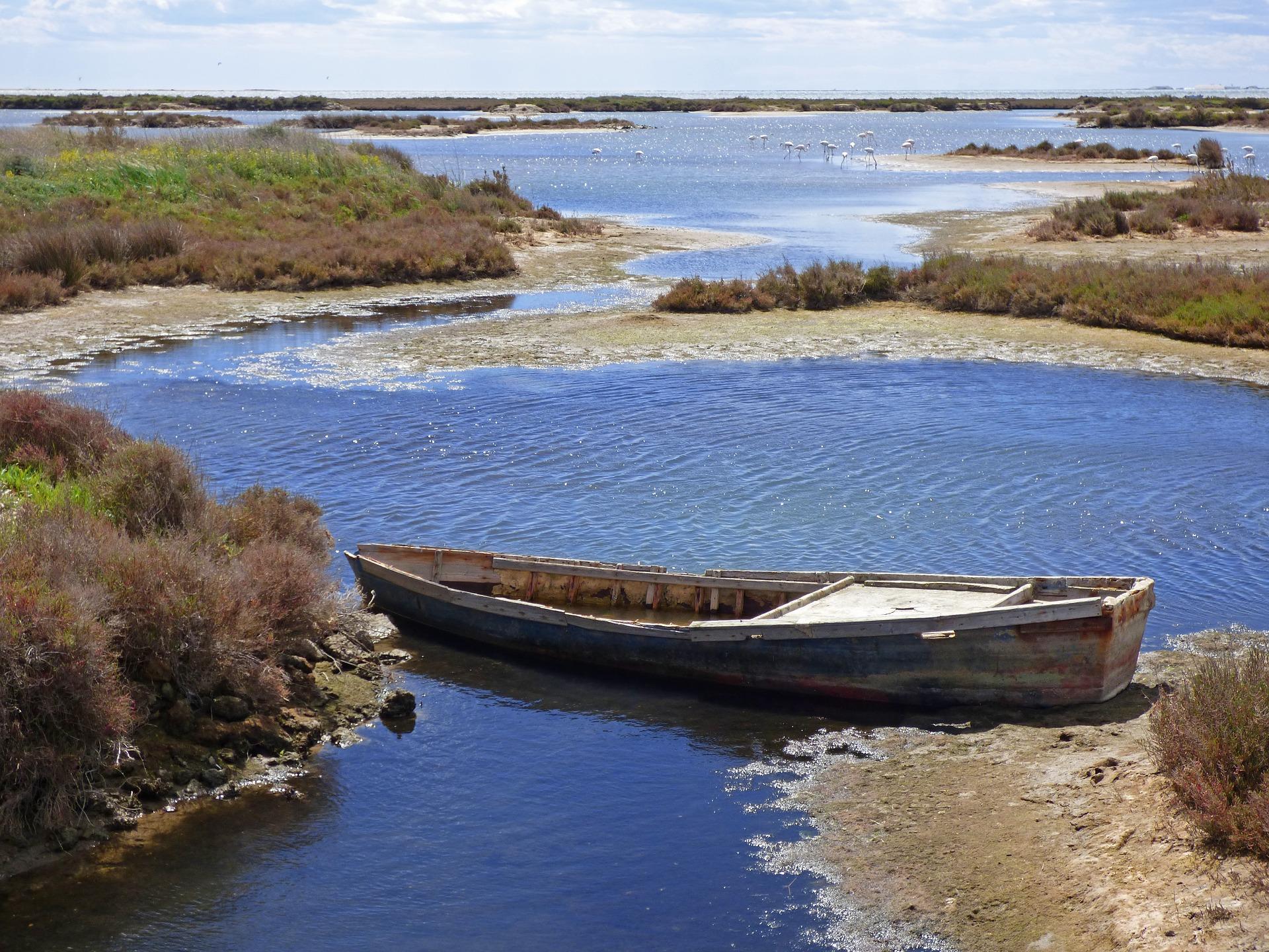 Espais com els aiguamolls de l'Empordà, el Delta de l'Ebre o l'Albufera de València es troben en risc de desaparèixer per sempre.
